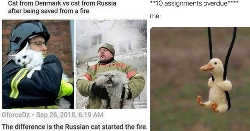 collection of animal memes for the middle of the week thumbnail includes two memes including one of two firefighters holding two cats 'Outerwear - Cat from Denmark vs cat from Russia after being saved from a fire 1030 Comments GforceDz Sep 26, 2018, 6:19 AM The difference is the Russian cat started the fire.' and another of a duck toy on a swing 'Bird - **10 assignments overdue**** me:'