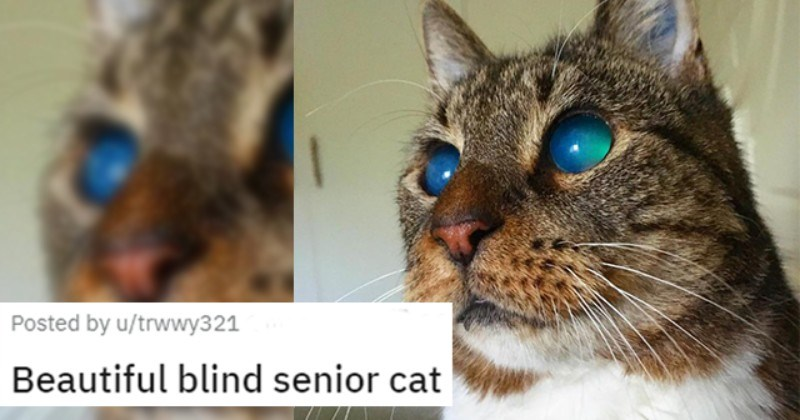 appreciation posts of blind cats thumbnail includes a picture of a senior blind cat with clear and striking blue eyes 'Beautiful blind senior cat u/trwwy321'