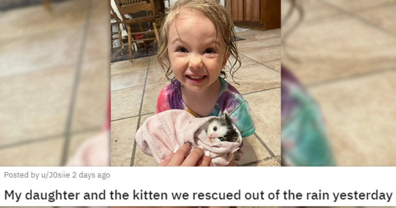 a collection of posts about cats | thumbnail includes a picture of a child holding a wrapped up kitty in her hands ''