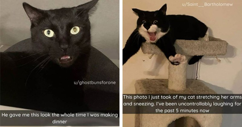 collection of cat Snapchats | thumbnail includes two snaps including a cat stretching and sneezing 'Cat - u/Saint__Bartholomew This photo I just took of my cat stretching her arms and sneezing. I've been uncontrollably laughing for the past 5 minutes now' and a cat looking confused 'Cat - u/ghostbunsforone He gave me this look the whole time I was making dinner'