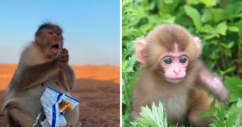 A Batch Of Marvelous Monkeys To Brighten Your Day