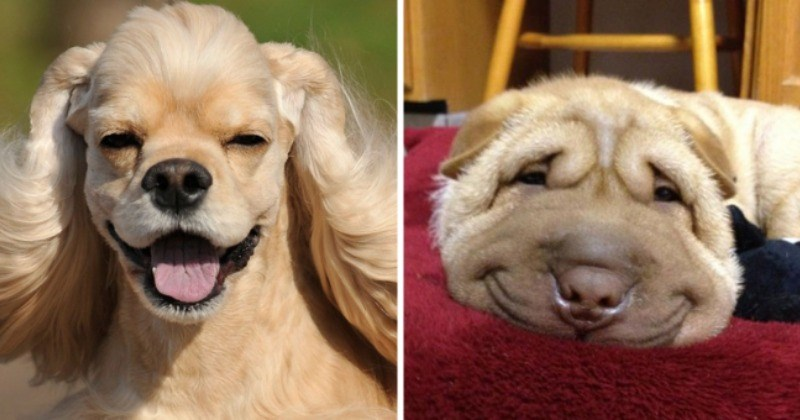 Smiling Doggos Everyone Can't Help But Smiling Back At