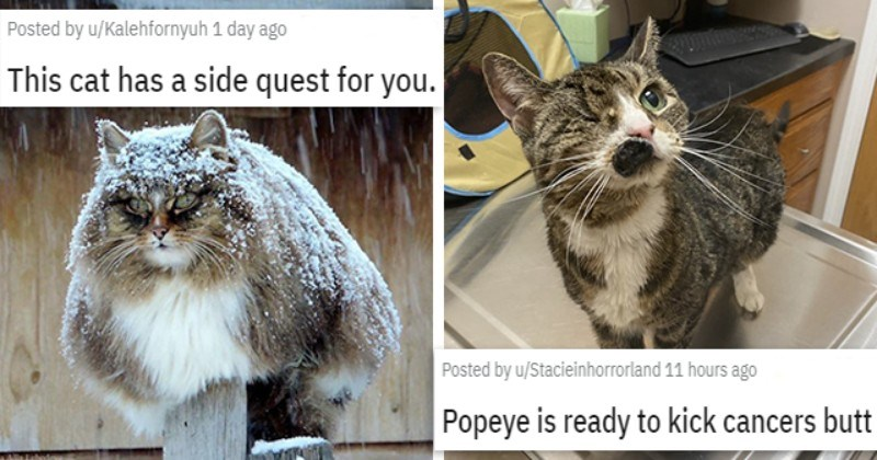 a collection of posts about cats | thumbnail includes two pictures including a cat with one eye 'Popeye is ready to kick cancers butt u/Stacieinhorrorland' and a choky cat with snow on it 'This cat has a side quest for you. u/Kalehfornyuh'