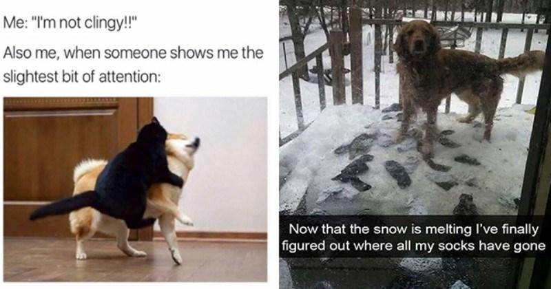 Bone-Lickin' Good And Fresh Doggo Memes