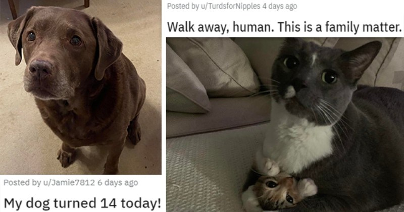 pics and vids of the cutest animals of the week | thumbnail includes two pictures including a dog 'My dog turned 14 today! u/Jamie7812' and a cat sitting on another cat 'Walk away, human. This is a family matter. u/TurdsforNipples'