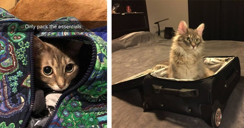 Jet Setting Felines Ready For Take Off
