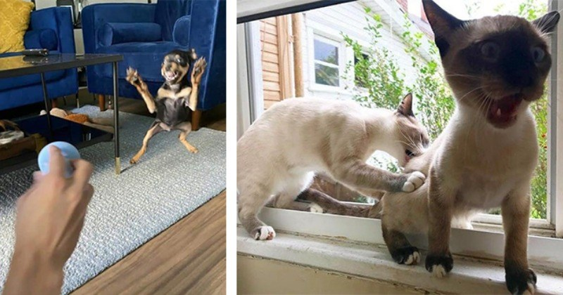 Confused Pets Silliest Moments Caught On Camera