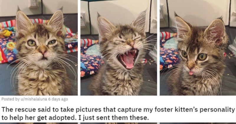 pics of the cutest animals of the week | thumbnail includes three pictures of a kitten making faces 'The rescue said to take pictures that capture my foster kitten's personality to help her get adopted. I just sent them these. u/mishalaluna'