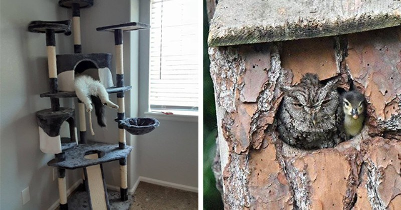 this week's collection of pictures that are worth more than 1000 words | thumbnail includes two pictures including an owl and a duckling sitting in a tree together as well as a cat sleeping in a funny position on a cat tree