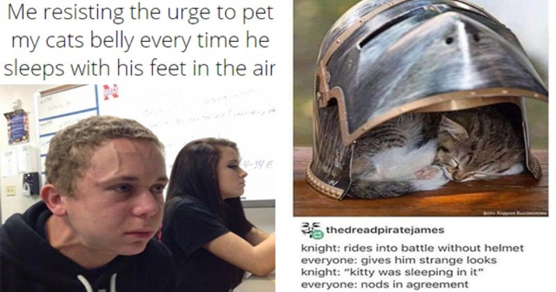 """collection of wholesome animal memes   thumbnail includes two memes including a man having trouble breathing 'Social group - Me resisting the urge to pet my cats belly every time he sleeps with his feet in the air TELANS Ahe 3 4-34 E' and a cat in a helmet 'Cat - doro Anapen BucoHonOsa thedreadpiratejames knight: rides into battle without helmet everyone: gives him strange looks knight: """"kitty was sleeping in it"""" everyone: nods in agreement'"""