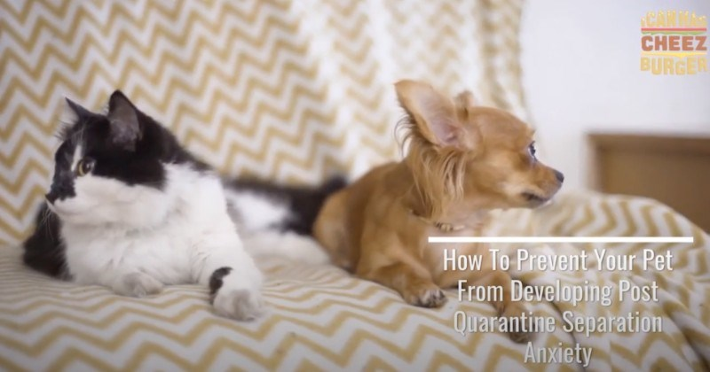 How to Prevent Your Pet From Developing Separation Anxiety Post Quarantine