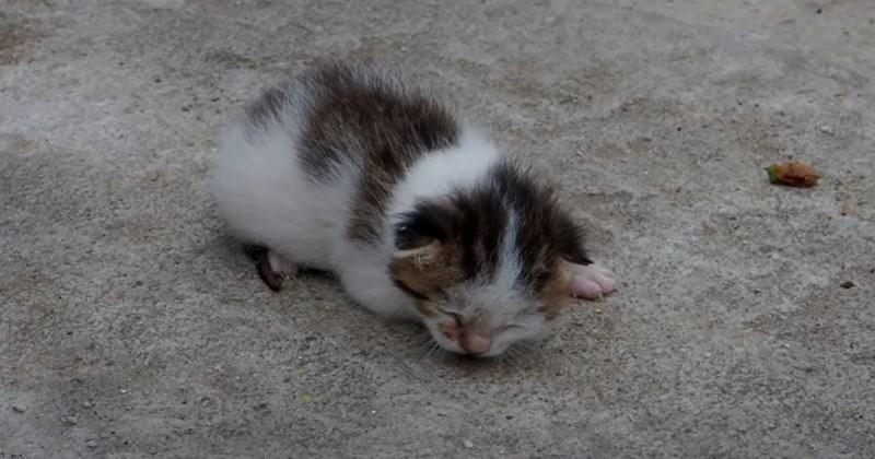 Baby Kitten By Dumpster Rescued (Video)