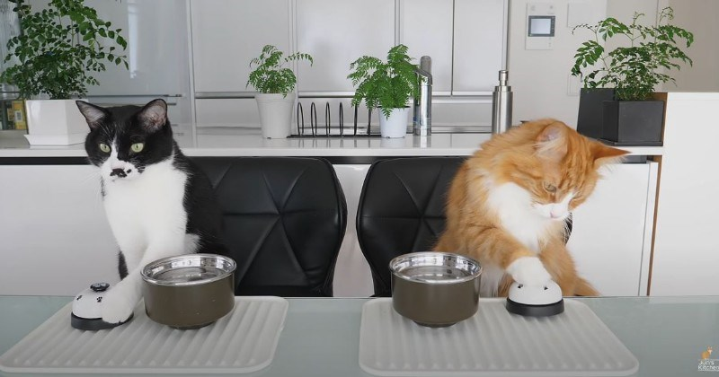 JunsKitchen Teaches Cats To Ring A Bell For Food (Video)