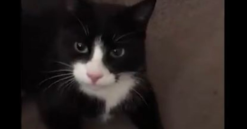 Naughty Cat Slippers Brings Live Duck Through Cat Flap