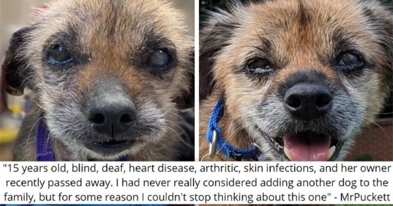 Thread: Senior, Blind, Deaf And Sick Dog Finds A Forever Home