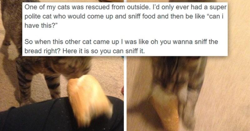 Tumblr Thread: Cats And Their Weird Bread Addiction
