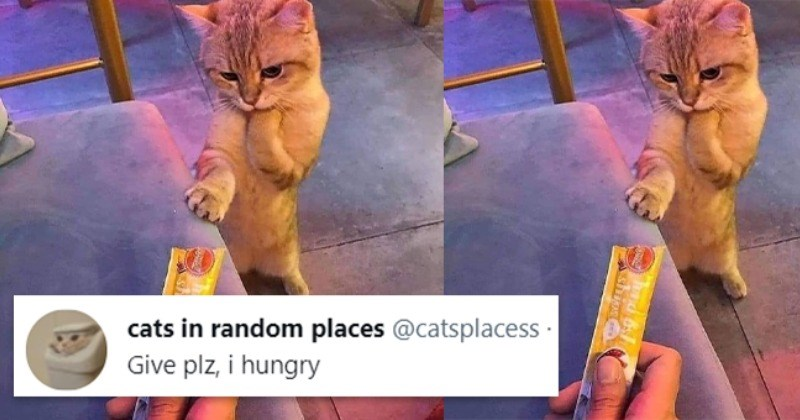 13 Purrfect Tweets From Twitter Celebrity Cats In Random Places