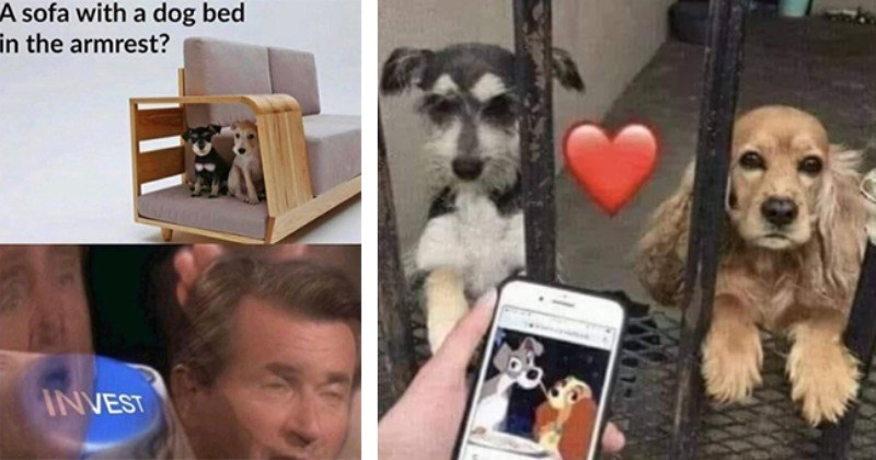 12 dog memes   thumbnail left dog bed in armrest of sofa invest meme, thumbnail right lady and the tramp doggos meme