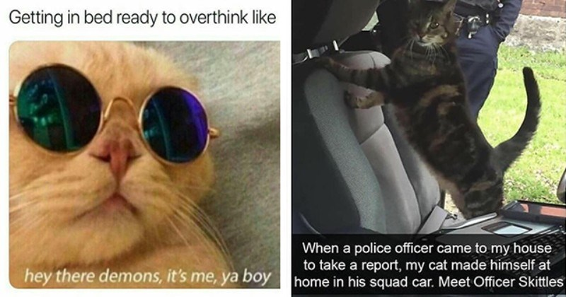 Caturday cat memes | thumbnail includes two memes including a cat wearing sunglasses 'Glasses - Getting in bed ready to overthink like hey there demons, it's me, ya boy' and a cat in a cop car 'Cat - When a police officer came to my house to take a report, my cat made himself at home in his squad car. Meet Officer Skittles'