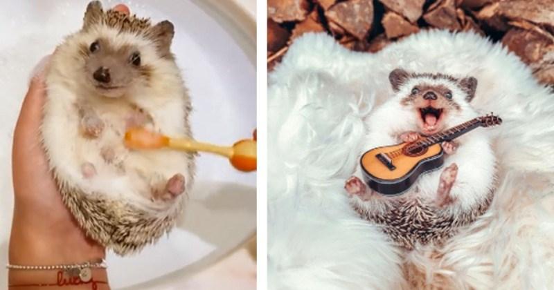 Meet Mr. Pokee: The Adventurous Instafamous Hedgehog