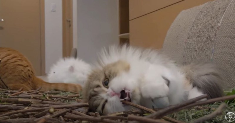Cordially Invited To A Massive $1000 Catnip Par-tay (Video)