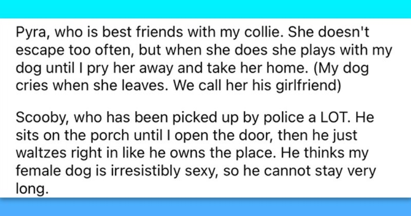 Friendly Neighbor Gets To Know All The Neighborhood Doggos