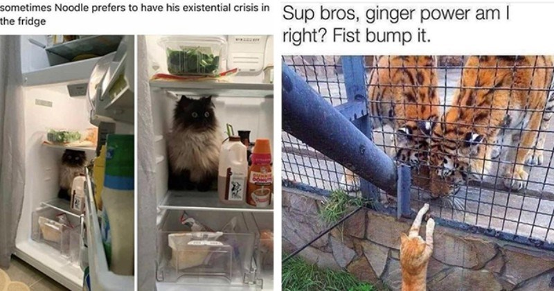 Hoppin' Into Another Purrfect Caturday With Fresh Cat Memes