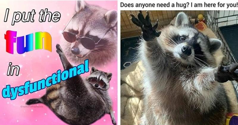 Raccoon Platoon Marching To The Moon (Trash Panda Memes)