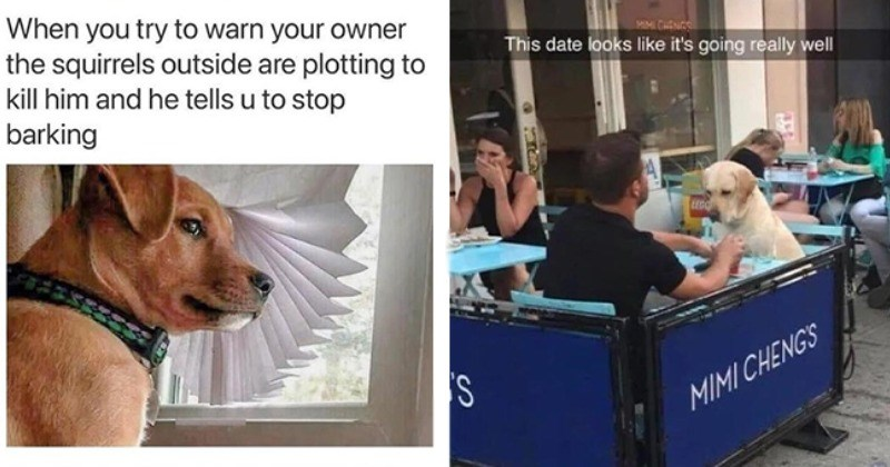 Nothin But Doggos: 12 Mood Lifting Memes For A Better Day