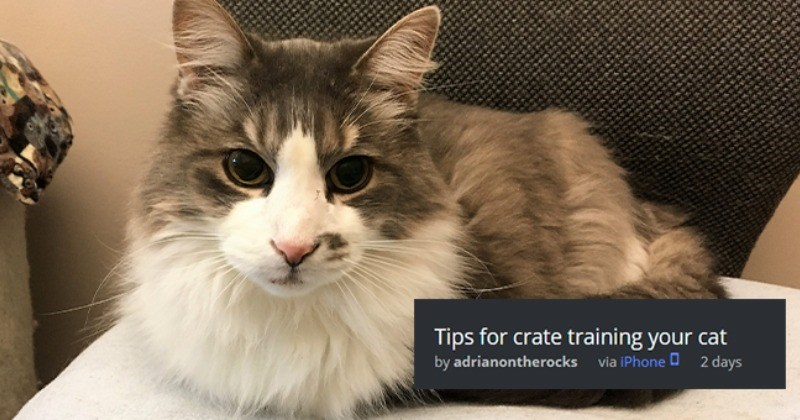 Nifty Tips And Tricks For Crate Training Your Cat