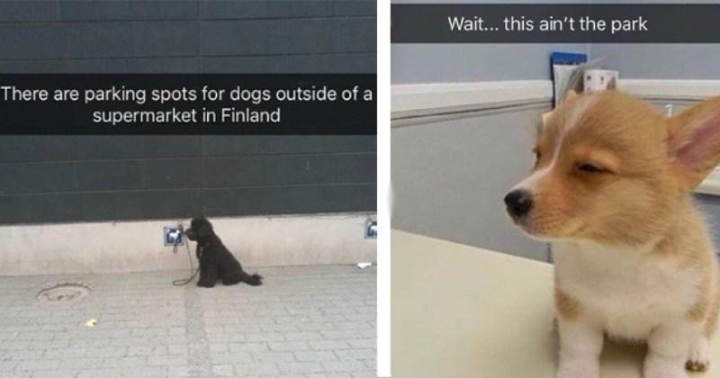 Doggo Snaps Of Pawsitivity And Good Vibes
