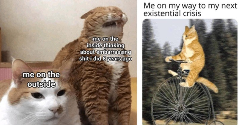Another Purrfectly Curated Cat Meme Dump