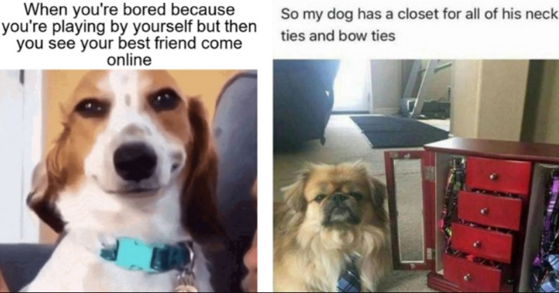 wholesome animal memes    thumbnail includes two memes saying 'bored because playing by yourself but then see best friend come online' and 'So my dog has a closet for all of his neck ties and bow ties'