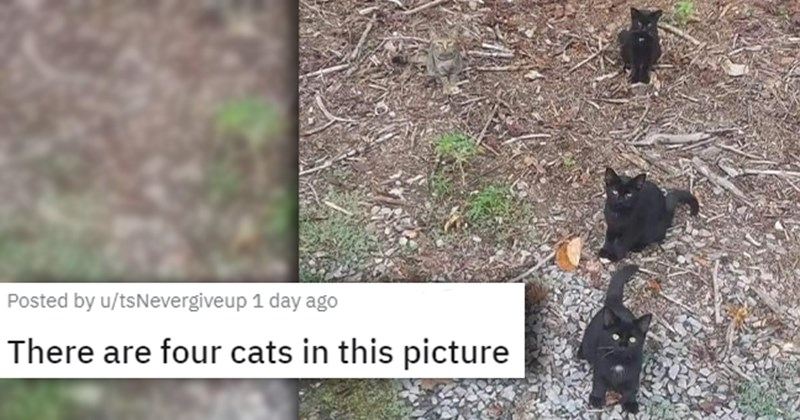 a collection of posts about cats   thumbnail includes a picture of four kittens 'There are four cats in this picture u/tsNevergiveup'