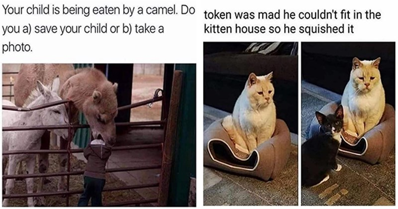 list of funny and fresh animal memes | thumbnail includes two memes including a cat squishing a kitten house 'Cat - token mad he couldn't fit kitten house so he squished' and a camel eating a kid 'Person -  child is being eaten by camel. Do save child or b) take photo.'