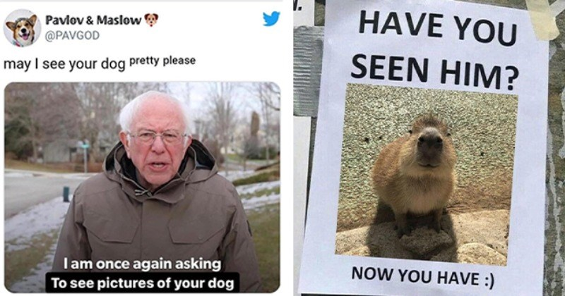 """30 animal themed memes and tweets   thumbnail left bernie sanders tweet """"I am once again asking to see pictures of your dog"""" thumbnail right """"have you seen him"""" poster with small brown animal face"""