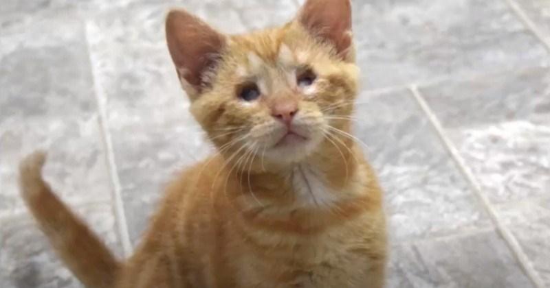 Awwdorable Blind Kitten Persevering Despite The Odds: Blind Cat Sanctuary