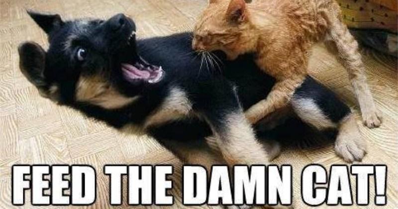 Throw Back Thursday Cat Memes - I Can Has Cheezburger?