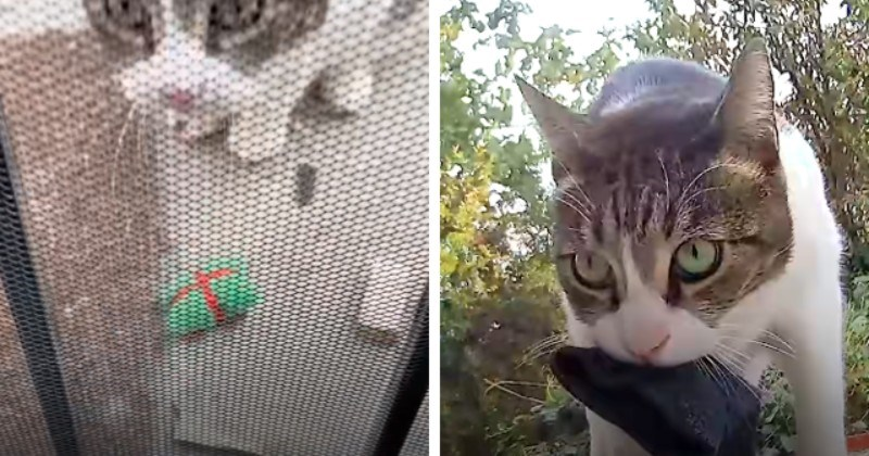 Delinquent Cat Keeps Stealing Things From Neighbors (Video)