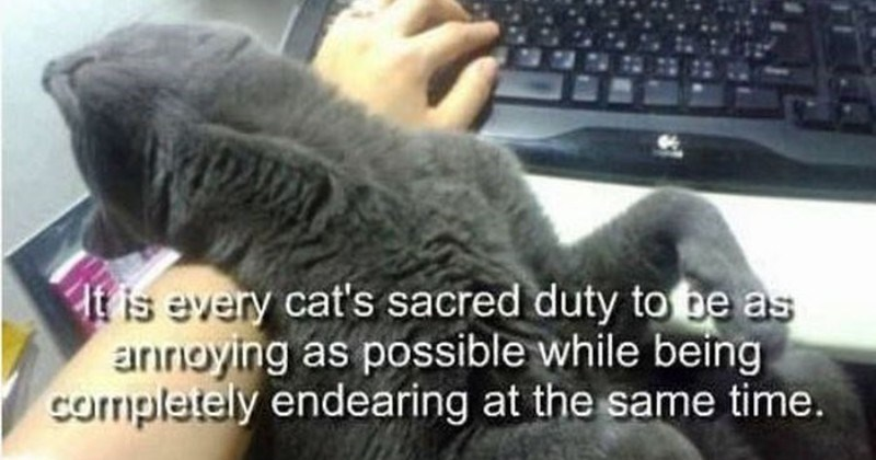 Funny true facts about cats