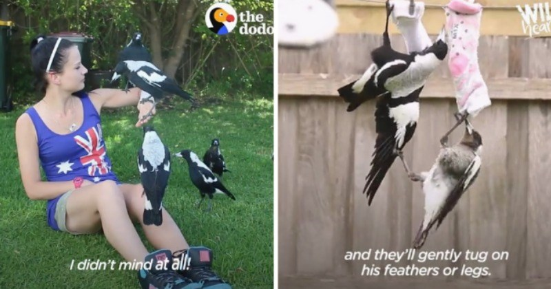 The Magpie Whisperer: Woman Cares For Dozens Of Beautiful Wild Birds