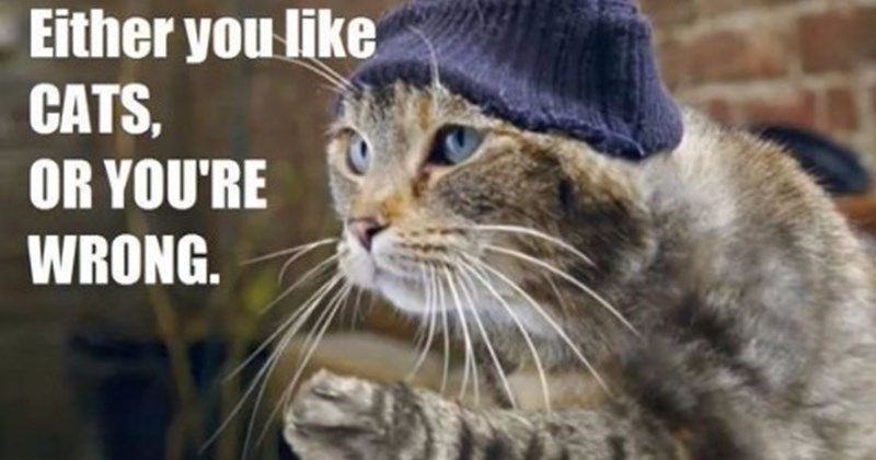 These Memes Will Tell You All You Need About The Tug Life of Cats