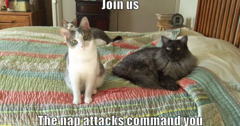funny list of lolcats memes