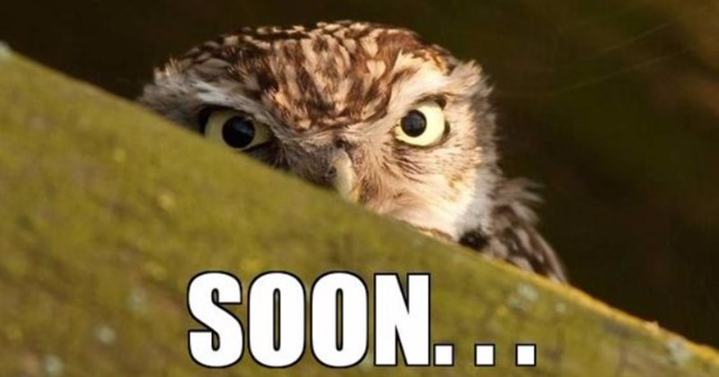 15 Hilarious Owl Memes I Can Has Cheezburger