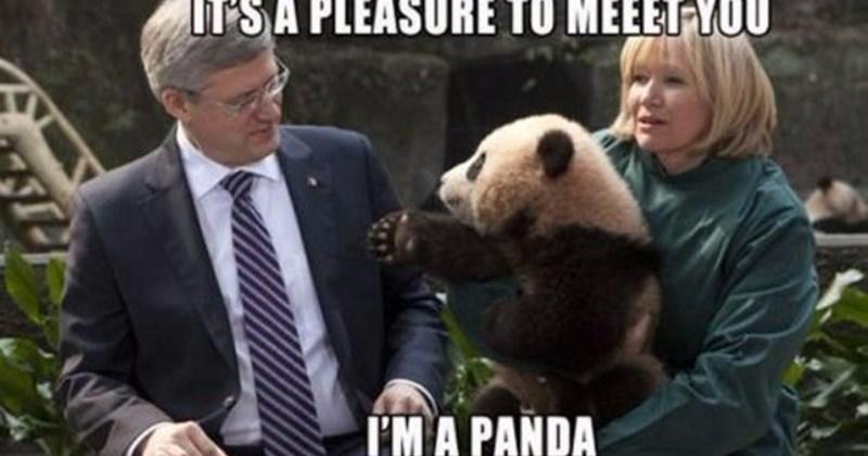 84 Stupid Panda Memes