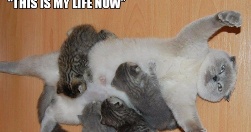 funny photos of frustrated animal mommys