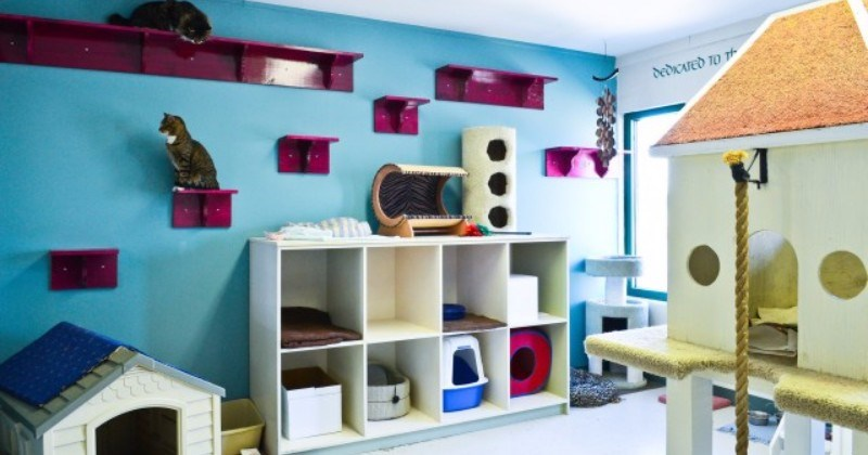 18 Amazing Cat Room Designs For Your Inspiration - I Can Has ...