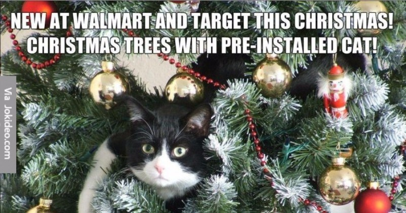 christmas memes with animals