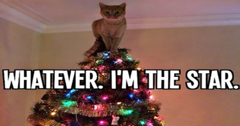 a funny list of cats reactions to christmas