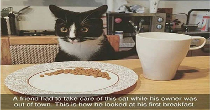snapchat 2017 Cats - 4291077